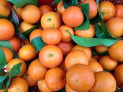 Alternate Bearing Citrus